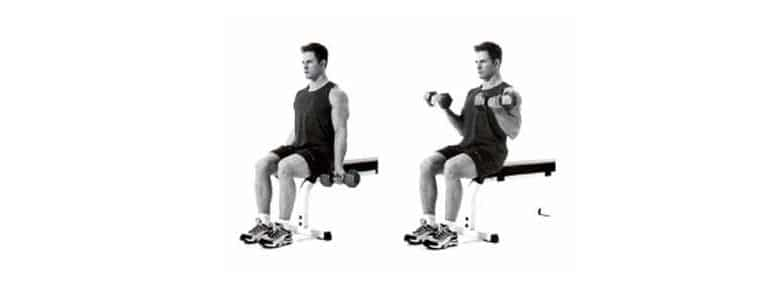 seated dumbbell bicep curl